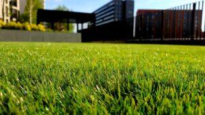 majhna trava