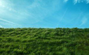 izredno visoka trava